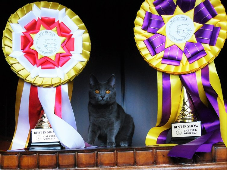 2 x EX1, NOM, BEST IN SHOW !!! :)